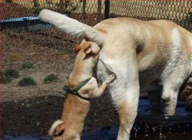 Kutya sex
